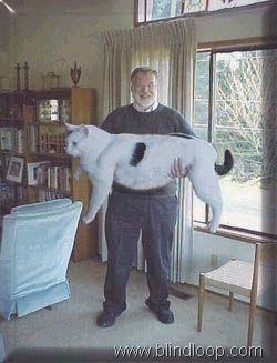Kucing Tergemuk dan Terbesar di Dunia