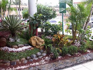 Roban plantas de ornato for 10 plantas de ornato