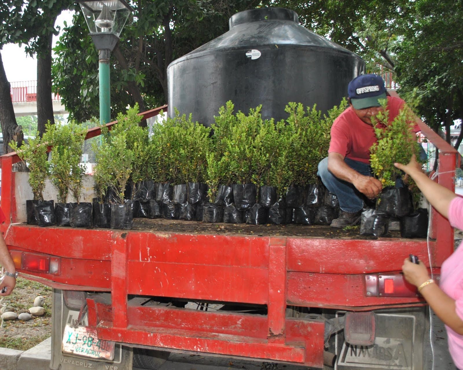 Llegan tres mil plantas for Tres plantas ornamentales