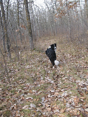 how to find deer trails in the woods