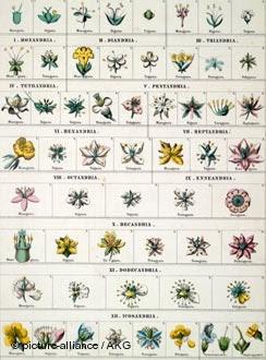 Todoproductividad el negocio de las plantas medicinales for Plantas ornamentales para colorear