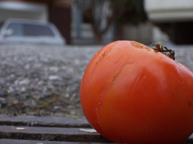 Tomatoe 11