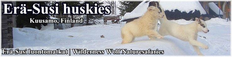 ERÄ-SUSI huskies