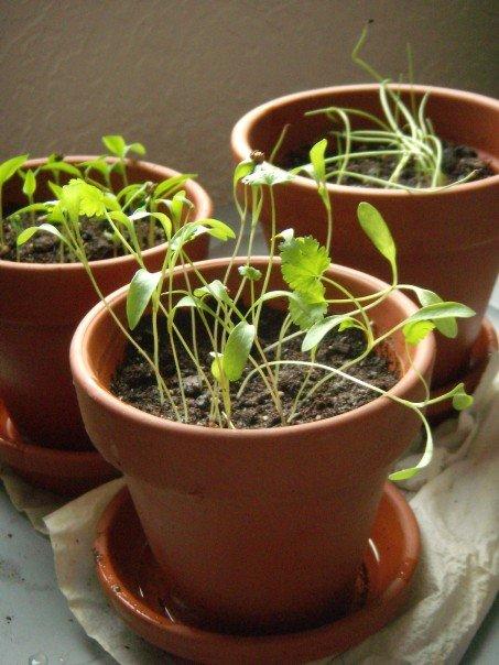 [plants]
