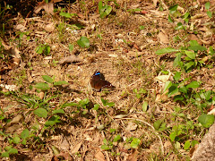 Butterfly South Lantau 2009