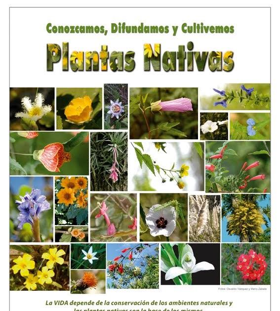 Con plantas nativas vuelven las mariposas a tu barrio en for Vivero plantas nativas