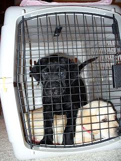 Dre and Daya in a crate