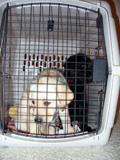 Delmar and Diamond in a crate