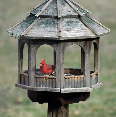 Cardinal at the Gazebo Feeder