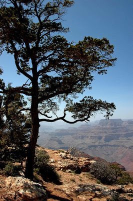 along the canyon rim at Desert View observation area