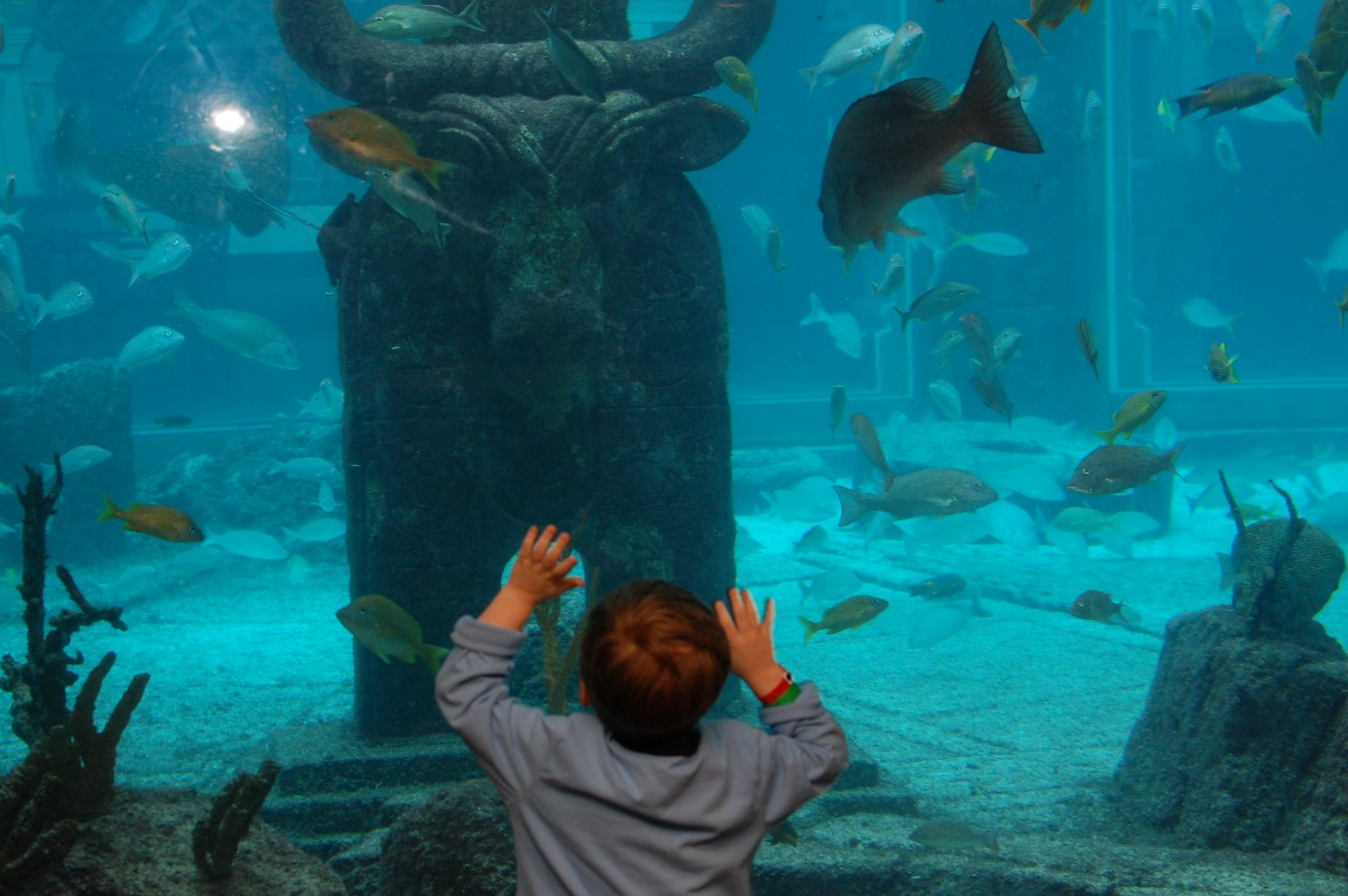 Little Bro checking out sea life at The Dig, Atlantis Paradise Island.