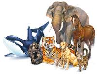 COSA SIGNIFICA SOGNARE ANIMALI