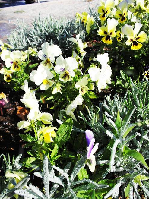 Belas flores, não escolhem a beleza dos vasos, mas, solo fértil.