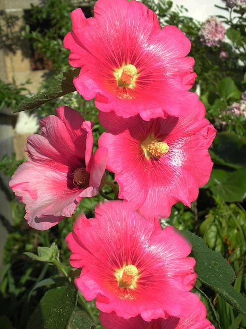 """""""Ilumine sua vida com a delicadeza das flores"""""""