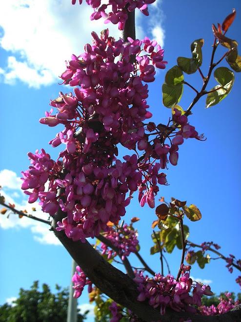 """""""As flores são bonitas em qualquer lugar do mundo muita gente tem forma mais não não tem conteúdo """""""