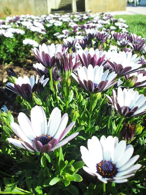 """""""A fragrância sempre permanece na mão de quem oferece flores."""""""