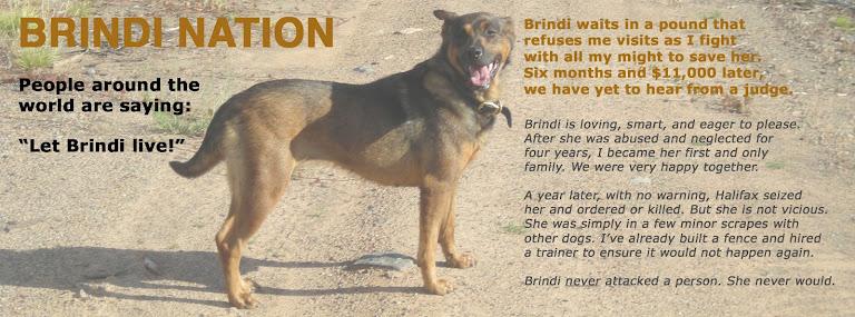 Brindi Nation