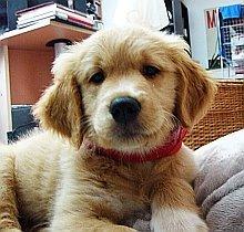 Goldie - 3 luni