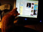 Alla katter diggar nätet