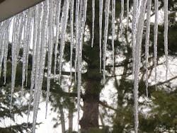 White ice, white pine, white sky