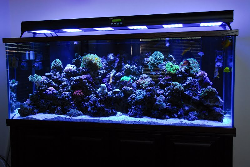 Tropical fishes and aquarium supplies for Fish aquarium stores