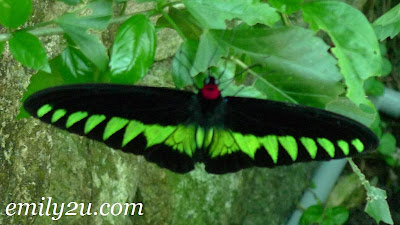 fluorescent green butterfly