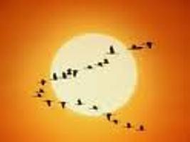 Ediciones Uñum Hue (lugar de pájaros)