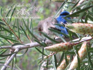 Blue Wrens pair