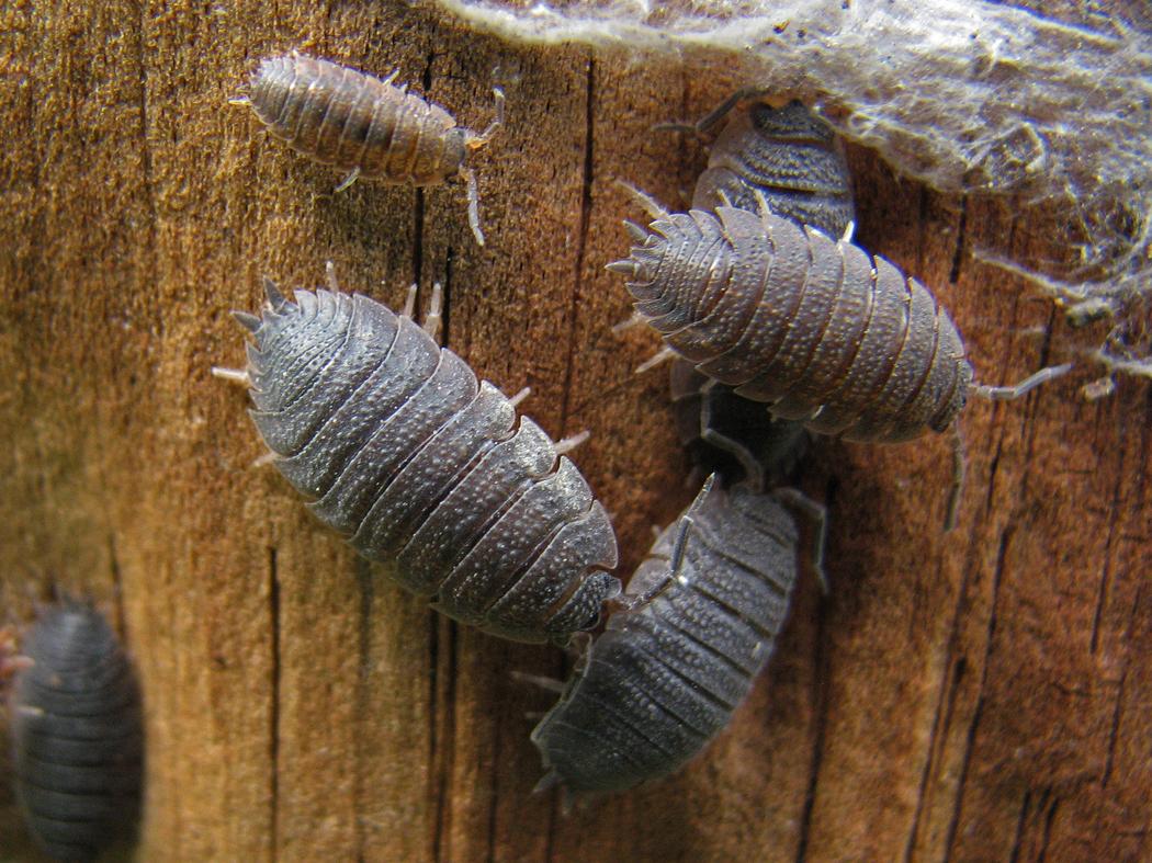 Insectos y otros invertebrados eventos en sala trivia - Soluciones para mosquitas de la humedad ...