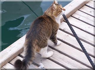 Venedik Nalı Kedisi