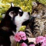 NÃO MALTRATE OS ANIMAIS!!!!
