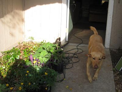 DivasoftheDirt,pup & plants