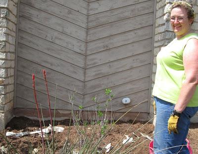 DivasoftheDirt,Chilopsia planted