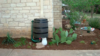 DivasoftheDirt,Mindy new rain barrel