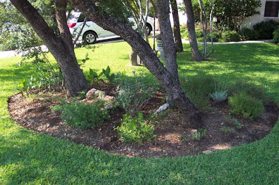 Divasofthedirt, tidy front bed