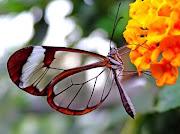 Quer borboletas em seu jardim?