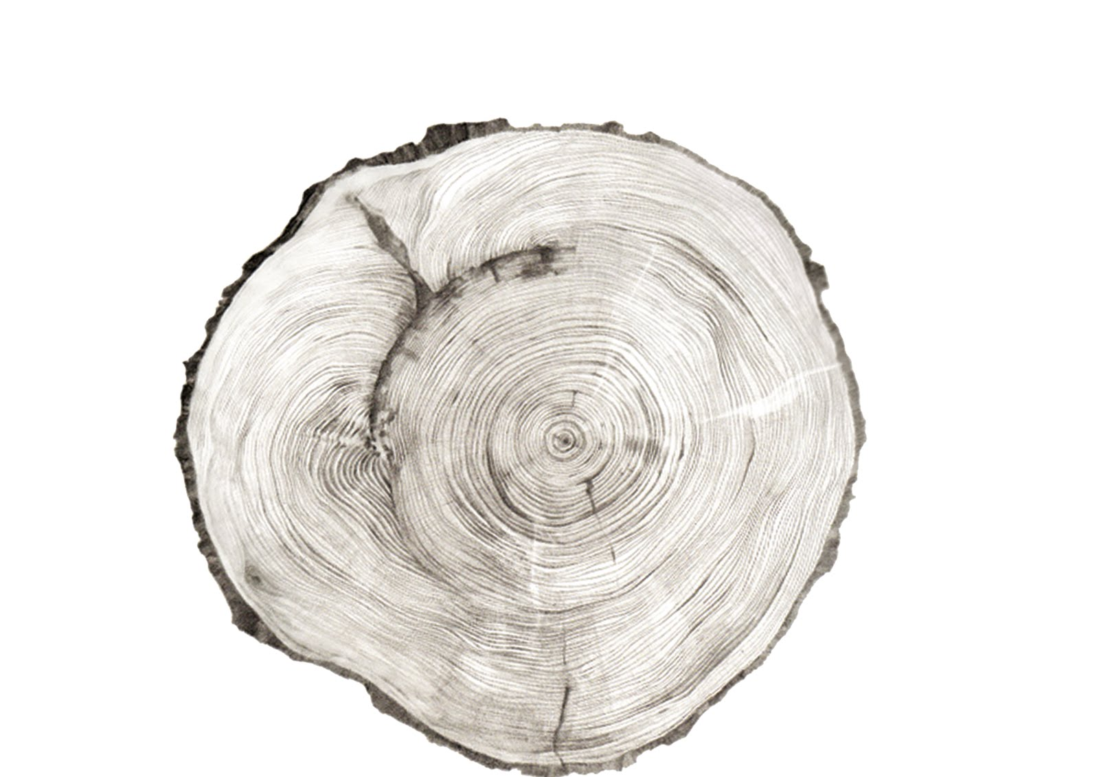 hd wallpapers tree stump coloring page dig earecom press