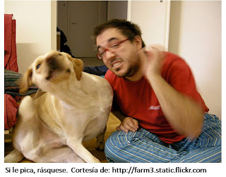 Hombre y perro rascándose