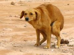 Όχι «σκατο-εκκλησία του κώλου», μόνο, αλλά και… «σκυλο-εκκλησία»