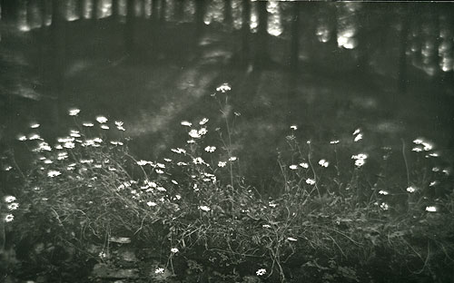 : JOSEF SUDEK