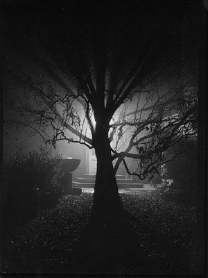 """MAGIC GARDEN"", ΦΩΤΟΓΡΑΦΟΣ: JOSEF SUDEK, 1952"