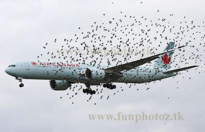 flight flying with birds