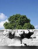 L'échelle de Richter du Bonsaïka