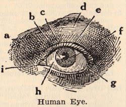 com olhos