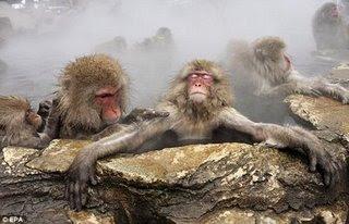 Monyet Berendam Air Panas di Musim Dingin