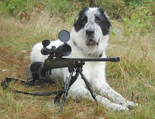 anjing imut, anjing lucu, anjing perang, tentara anjing