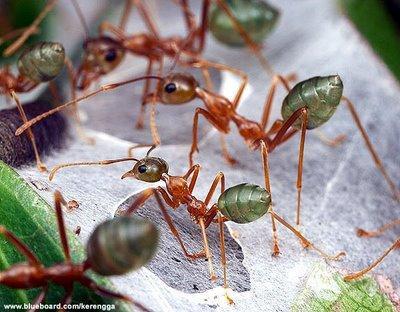 Beginilah Cara Cepat Hindari Serbuan Semut