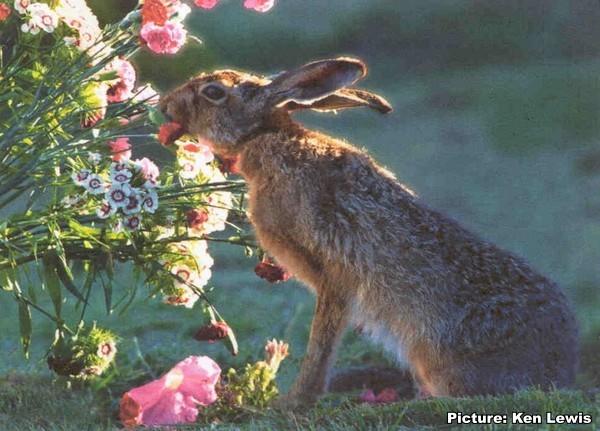 [hare034]