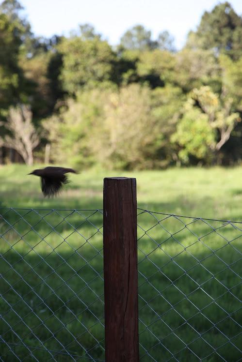 Cores da Coxilha. Cortesia de www.grassiproducoes.com.br Fotógrafo Erio Grassi 08.11.10