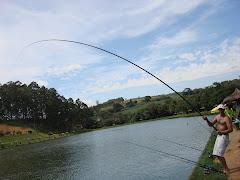 Vara Daiwa 7 metros - Ale